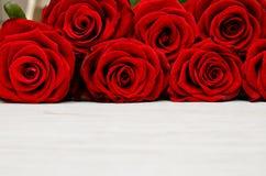 Primer en un fondo blanco, vista delantera, lugar de las rosas rojas para el texto Foto de archivo
