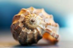 Primer en una concha marina Fotos de archivo