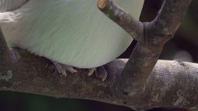 Primer encima de los pies que se sientan en una rama - 4k de los pelican's metrajes