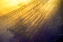 Primer escénico de la naturaleza de árboles en la salida del sol con la niebla Imágenes de archivo libres de regalías