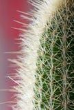 Primer espinoso del cactus para el fondo o el wallpape foto de archivo libre de regalías
