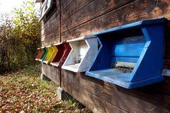 Primer europeo de la casa de abeja Fotografía de archivo