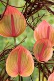 Primer exótico de la flor fotografía de archivo