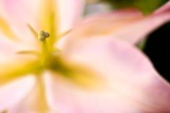 Primer exótico rosado de la flor Imagen de archivo libre de regalías