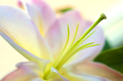 Primer exótico rosado de la flor imagen de archivo