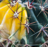 Primer extremo de los puntos del cactus imágenes de archivo libres de regalías