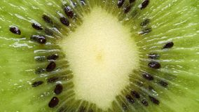 Primer extremo del kiwi almacen de video