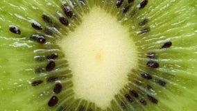 Primer extremo del kiwi