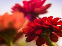 Primer floral - jugando con la profundidad del campo imagenes de archivo