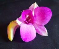 Primer floreciente de la planta de las flores al aire libre Imagen de archivo