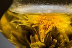 Primer floreciente del té Imagen de archivo libre de regalías