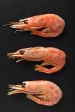 Primer fresco de los camarones de los mariscos fotos de archivo libres de regalías
