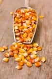 Primer fresco del maíz Fotografía de archivo