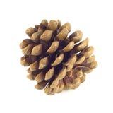 Primer grande del cono del pino Foto de archivo