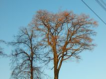 Primer grande hermoso del árbol con el cielo azul Imagen de archivo libre de regalías