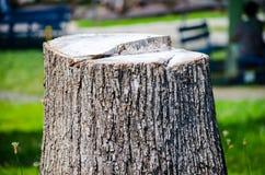 Primer grueso del tocón de árbol Fotografía de archivo