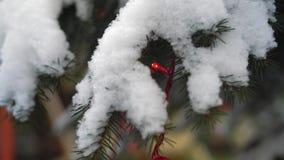 Primer, guirnalda roja en el árbol de navidad nevado en el parque almacen de video