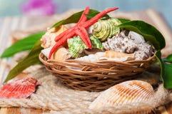 Primer hermoso de las conchas marinas en una cesta Foto de archivo