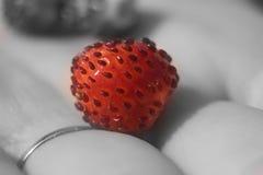 Primer hermoso rojo de la fresa de la fresa Imágenes de archivo libres de regalías