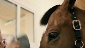 Primer: hombre que peina un caballo del bozal almacen de metraje de vídeo