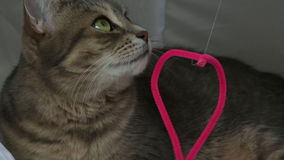 Primer juguetón lindo de los ojos verdes del retrato del gato metrajes