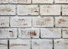 Primer la pared pintada blanco del ladrillo del grunge Fotos de archivo libres de regalías