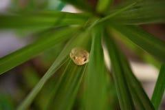 Primer macro de la rana en la hoja fotos de archivo libres de regalías