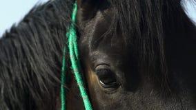 Primer macro del ojo del caballo afuera metrajes