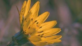 Primer, macro muchos pequeños insectos que se arrastran sobre la flor azul en el claro en el bosque metrajes