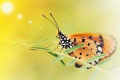 Primer, mariposas del vintage que caminan en las ramas con luz del sol foto de archivo libre de regalías