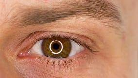 Primer masculino del ojo del centelleo hermoso Cámara lenta metrajes