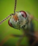 Primer minúsculo verde de la avispa Imágenes de archivo libres de regalías