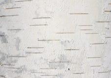Primer natural del documento de información de la textura de la corteza de abedul Imágenes de archivo libres de regalías