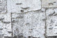 Primer natural del documento de información de la textura de la corteza de abedul Fotos de archivo