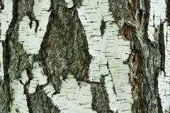Primer natural del fondo de la corteza de abedul Fotografía de archivo
