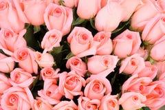 Primer nupcial rosado del fondo de las rosas Fotografía de archivo libre de regalías