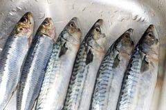 Primer preparado de los pescados Imagen de archivo