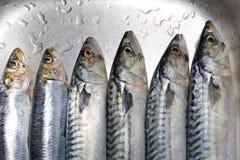 Primer preparado de los pescados Imágenes de archivo libres de regalías