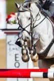 Primer principal de salto de las piernas del caballo Foto de archivo libre de regalías
