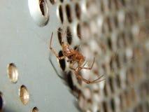 Primer que falta del Web spider de orbe del sector Imágenes de archivo libres de regalías