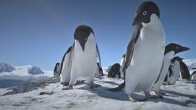 Primer que juega pingüinos Paisaje de la Antártida metrajes