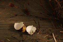 Primer quebrado del huevo de codornices Fotografía de archivo libre de regalías