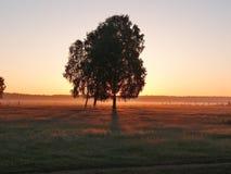 Primer rayo de la sol Fotos de archivo