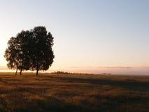 Primer rayo de la sol Imagen de archivo libre de regalías