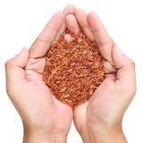Primer rojo del arroz Foto de archivo libre de regalías