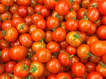 Primer rojo maduro del chile de los tomates Fotografía de archivo