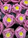Primer rosado de la flor de loto Imagen de archivo
