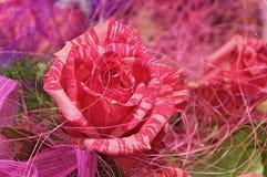 Primer rosado de las rosas Fotos de archivo