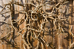 Primer seco del fondo de la rama de árbol. Horizontal. Fotos de archivo libres de regalías