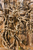 Primer seco del fondo de la rama de árbol. Vertical. Fotografía de archivo